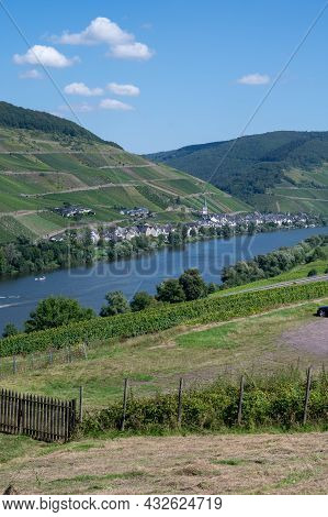Panoramic View On Hilly Vineyards With White Riesling Grapes In Mosel River Valley, Germany