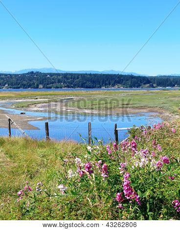 Marrowstone island. Olympic Peninsula. Washington State. Marsh land with sal water and northwest wild flowers. poster