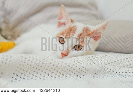 White And Ginger Cat 3-4 Months Lies On Light Blanket. Kitten With Foot Bandaged With Yellow Bandage