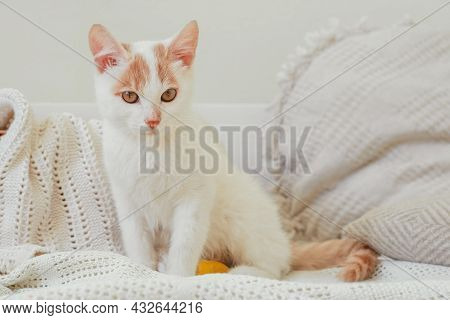 White And Ginger Cat 3-4 Months Sits On Light Blanket. Kitten With Foot Bandaged With Yellow Bandage