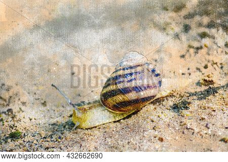 Garden Snail In The Sand. Mollusk Slowly Crawling On Wet White Sand. Animals In Their Natural Habita