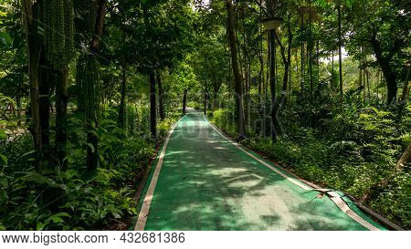 Green Bicycle Lane And White Line Border Through The Jungle Under Greenery Trees