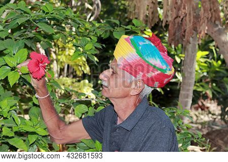 Close-up Profile View Of An Indian Elderly Farmer Delighted To See A Red Hibiscus Flower Blooming In