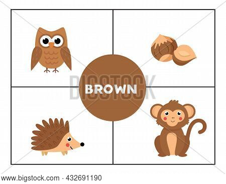 Learning Basic Primary Colors For Children. Brown.