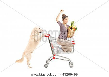 White retriever dog pushing a woman in a shopping cart isolated on white background poster