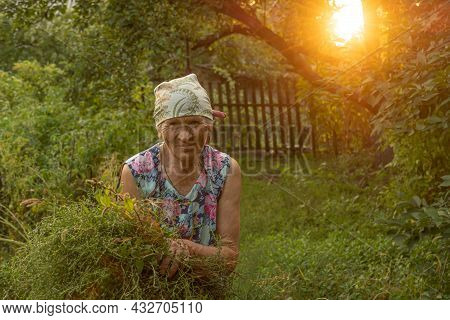 Authentic Portrait Of 80s Years Woman Holding Bunch Of Weeds After Weeding Of Farmhouse Kitchen Gard
