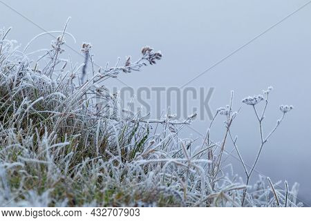 Frost-covered Branches Of Wilted Plants In Winter On A Blurred Background