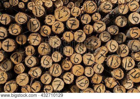 Ends Of Tree Trunks Cut Down In Felling With A Handwritten Diameter On Each