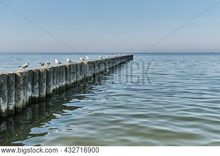 Seagulls On Wooden Posts As Breakwaters On The Baltic Beach Of Svetlogorsk. Beautiful Seascape.