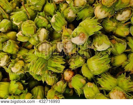 Detail Of A Heap Of Unhusked Freshly Picked Hazelnuts. The Skin Is Green And The Kernel Is White.