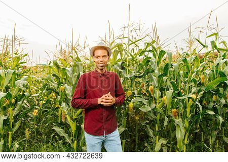 Handsome Male African American Modern Farmer And Entrepreneur Posing In The Corn Crop And Smiling At