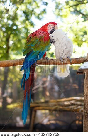 Two Large Exotic Parrots Of Bright Color Are Sitting On A Thick Branch Against The Background Of Tre