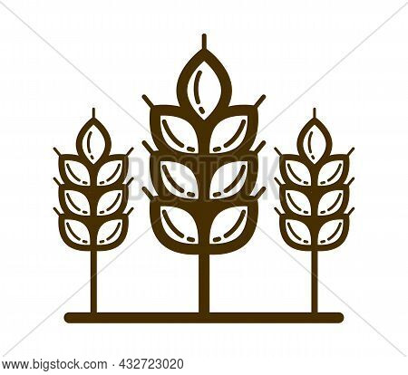 Ripe Wheat Spike Vector Linear Icon Isolated On White Background, Design Element For Emblem Or Logo
