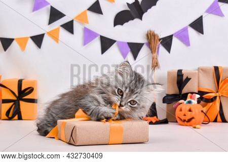 A Fluffy Cute Gray Kitten Is Sitting In A Halloween Style. A Greeting Card For Halloween. Happy Hall