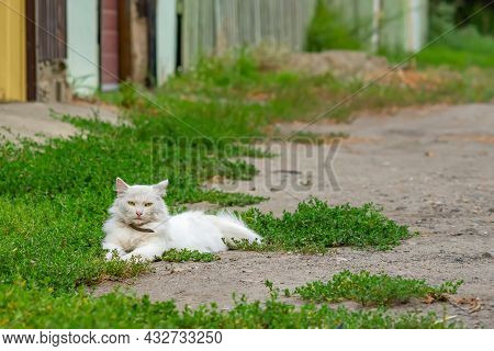 A Domestic Beautiful, Calm White Fluffy Cat With A Collar Lies Near The Fence Of The House Of Its Ya