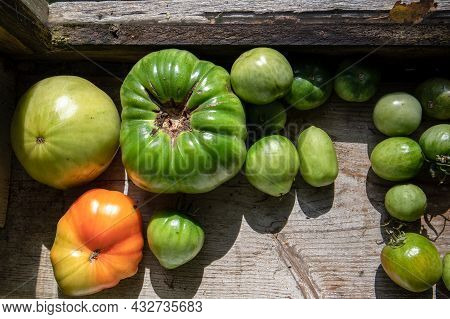 Home Grown Tomatoes. Organic And Non-chemical Foods. Vegetarian And Vegan