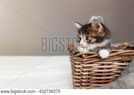 Little Small Kitten Sit Inside Wooden Wicker Basket And Looking Upfront