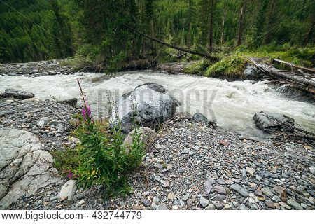Beautiful Scenery With Small Pink Flowers Of Fireweed Among Boulders And Stones Near Powerful Mounta