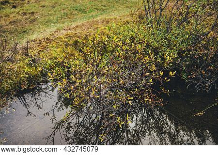 Scenic Nature Background With Wild Mountain Flora In Gold Autumn Colors. Yellow Leaves Above Water S