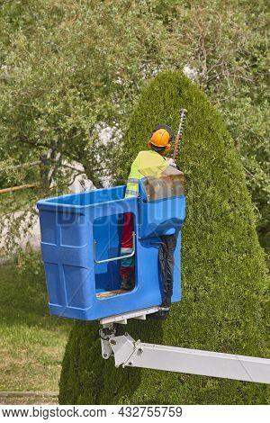 Gardener Pruning A Cypress On A Crane. Seasonal Trees Maintenance