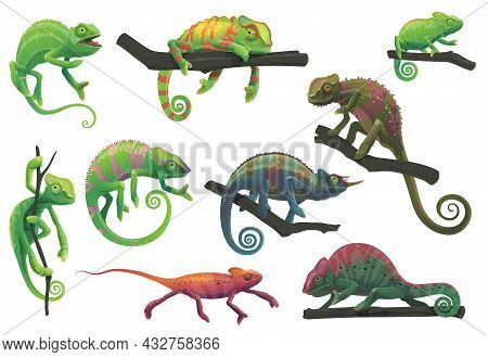 Chameleon Lizards With Tree Branches Vector Set With Cartoon Reptile Animals Of Panther, Jackson, Ve