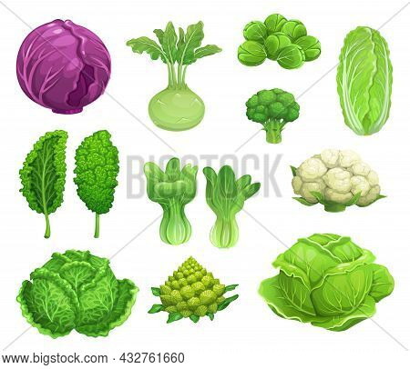 Cartoon Vector Cabbage And Cauliflower Vegetables, Fresh Farm Food. Green And Red Cabbage, Lettuce,
