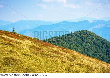 Grassy Meadows Of Carpathian Mountains On A Sunny Autumn Day. Beautiful Landscape Of Polonyna Krasna