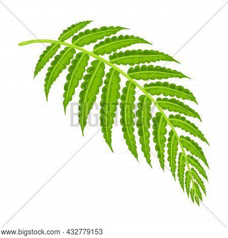 Illustration Of Fern Leaf. Decorative Image Of Tropical Foliage And Plant.