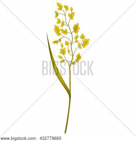 Illustration Of Stylized Cereal Grass. Decorative Meadow Plant. Twig For Design And Decoration.