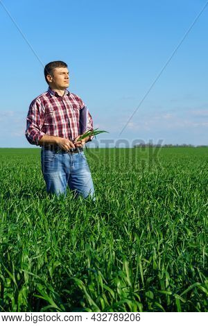a man as a farmer poses in a field, dressed in a plaid shirt and jeans, checks reports and inspects young sprouts crops of wheat, barley or rye, or other cereals, a concept of agriculture and agronomy