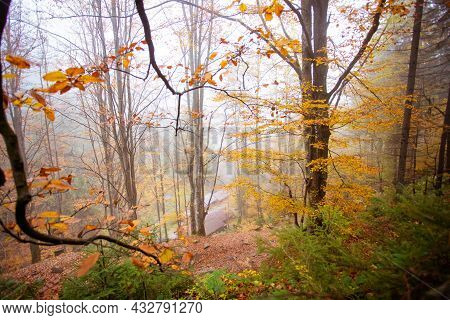 Steep Slope In The Autumn Forest With Houses In The Valley
