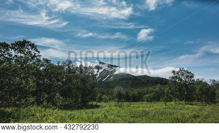 Lush Grass And Deciduous Trees Grow On A Green Meadow. In The Distance, A Mountain With Snow-covered