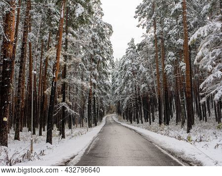 Forest In The Snow. Winter Picture. The Pedestrian Road Goes Deep Into The Coniferous Forest. Chemal