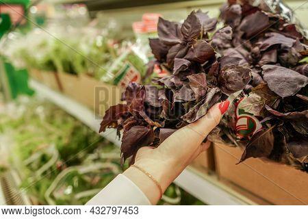 Female Hands Check Leaves Basil In Supermarket.