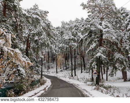 Forest In The Snow. Winter Picture, Tree Branches Are Covered With Snow. The Road Makes A Turn Into