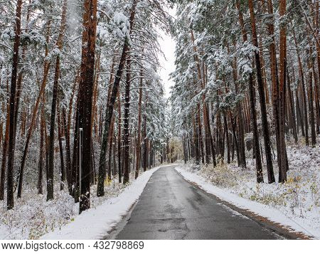 Forest In The Snow. Winter Picture. The Road Goes Deep Into The Coniferous Forest. Chemal Village, A