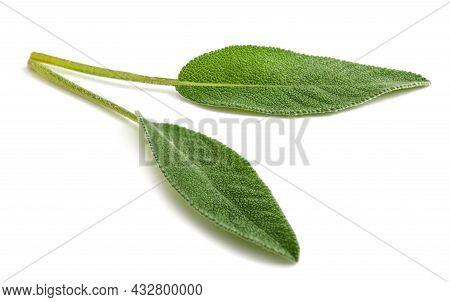Fresh  Sage Leaves Isolated On White Background