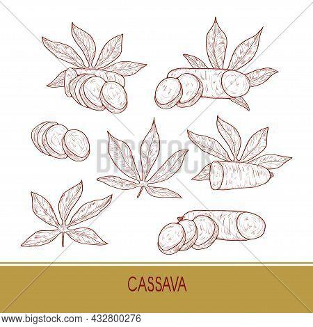 Cassava. Tuber Leaves. Sketch. Set. On A White Background.