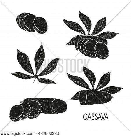 Cassava. Tuber, Leaf. Black Silhouette On White Background.