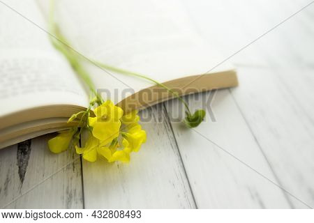 Yellow spring flowers in a book on white wooden background, reading concept, pleasant morning mood