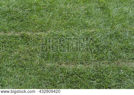 Green Grass Texture From A Field, The Stacking Of Roll Green Lawn Grass. Quick Landscaping. New Lawn