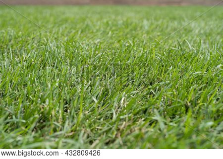 Green Grass Natural Background Texture, Close-up On A Green Lawn. Image Of Fresh Green Grass Backgro