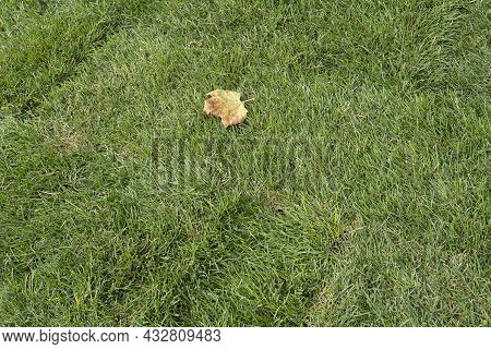 Sod For New Lawn In A Fall, The Stacking Of Roll Green Lawn Grass. New Grass Of Rolling
