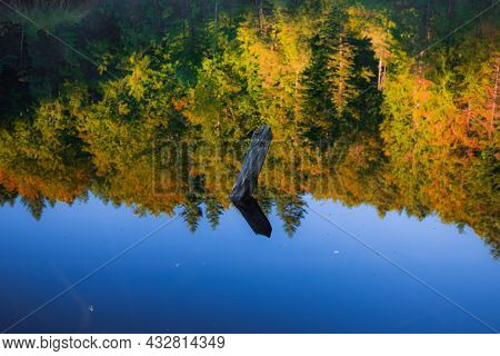 Tranquil Water Surface With Reflection From October Vibrant Trees Foliage And Sunken Snag In Lake Pi