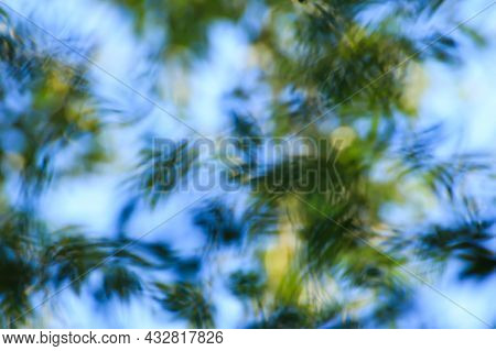 Abstract Nature Background. Defocused Tree Leaves On Blue Sky Background