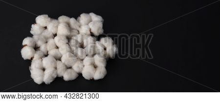 Cotton Flowers Isolated On Black Background. Studio Shot Flat Lay Top View