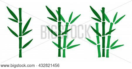 Set Of Hand Drawn Bamboo Branches With Leaves. Bamboo Plants In Minimalistic Design. Doodle Style Ve