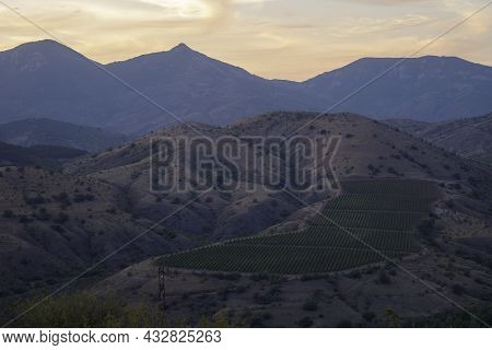 The Slopes Of The Mountain Ranges At Sunset Time. Vineyard Among The Mountains. Atmospheric Perspect