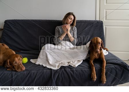 Lonely Woman Spending Weekend Evening At Home Drinking Tea With Two Dogs Has No Boyfriend And Friend
