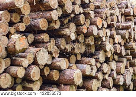 Logs In A Heap. Harvesting Pine Logs In The Forest. Folded Wood. A Pile Of Logs In A Coniferous Fore
